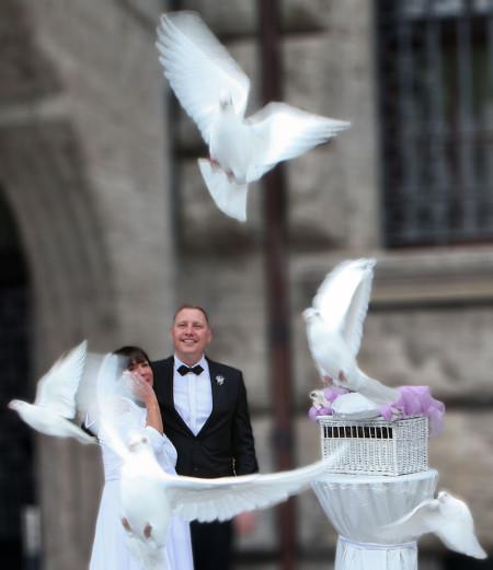 LE-Hochzeitstauben, weiße Tauben aus Leipzig und Umgebung