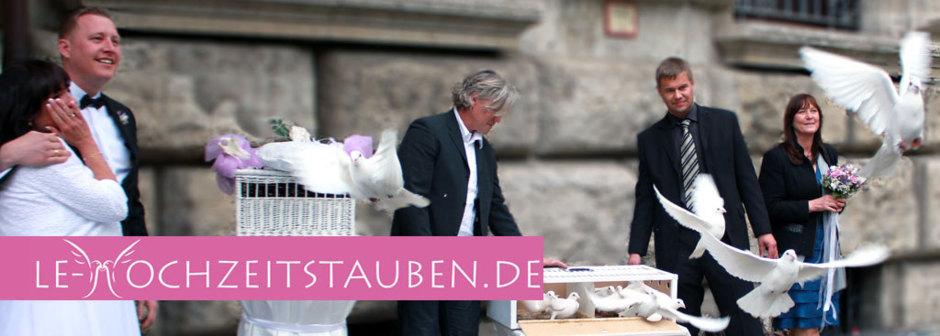 LE-Hochzeitstauben, weiße Brieftauben aus Leipzig und Umgebung
