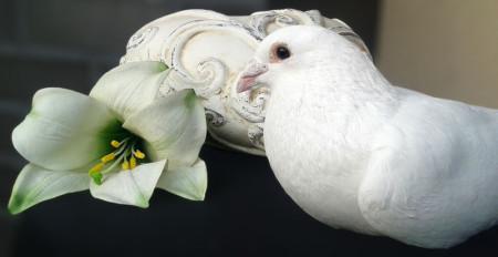 Weiße Tauben als Zeichen der Trauer